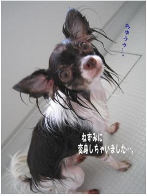 コピー ~ お洗濯