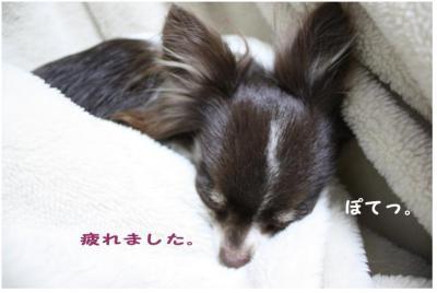 コピー (6) ~ お洗濯