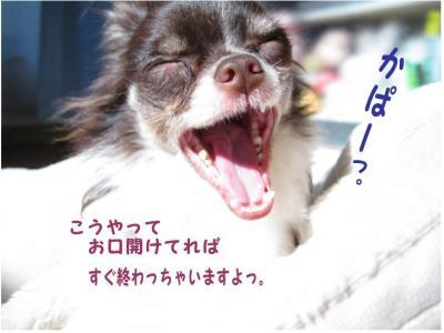 コピー ~ 歯
