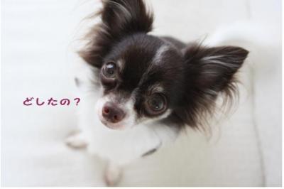コピー (6) ~ 髪型
