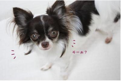 コピー ~ 髪型