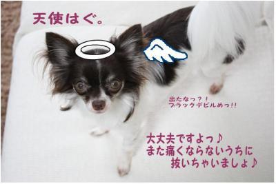 コピー ~ tensi