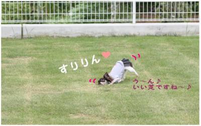 コピー (5) ~ お里