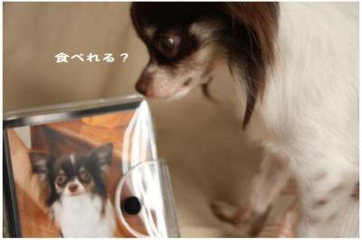 コピー (11) ~ お里