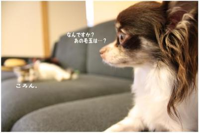 コピー (4) ~ 新入り