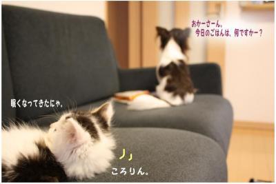 コピー (6) ~ 新入り