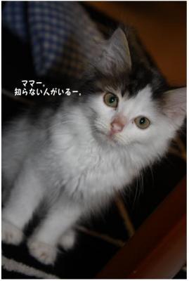 コピー ~ 新入り
