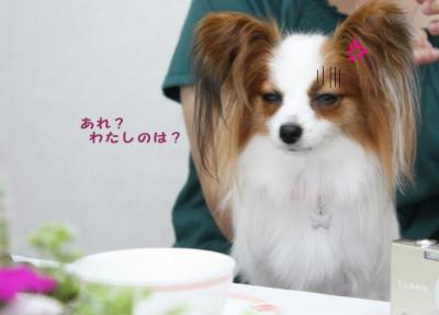コピー (8) ~ さんぽみち