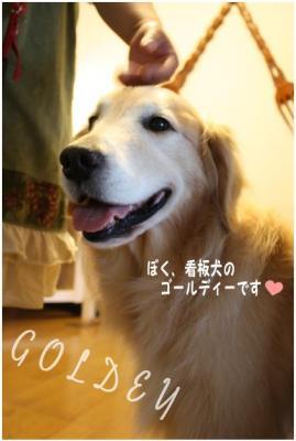 コピー (9) ~ さんぽみち