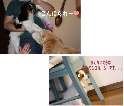 コピー (11) ~ さんぽみち