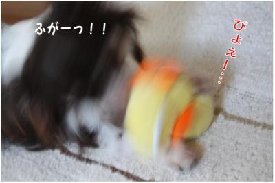コピー (2) ~ ぴよ