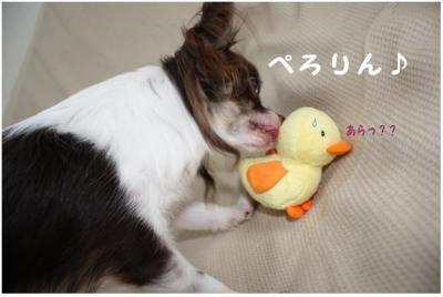 コピー (4) ~ ぴよ