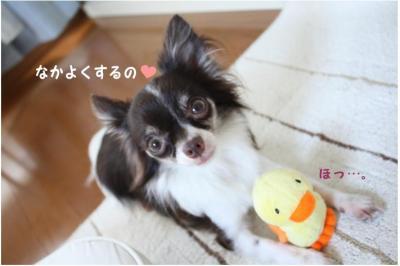 コピー (6) ~ ぴよ