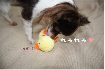 コピー (5) ~ ぴよ