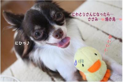 コピー (7) ~ ぴよ