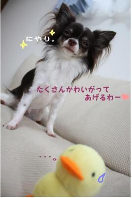 コピー ~ ぴよ