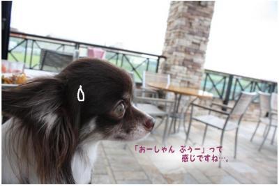 コピー ~ オーシャン