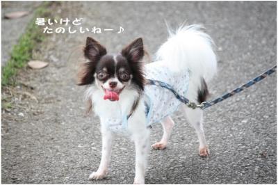 コピー (9) ~ オーシャン