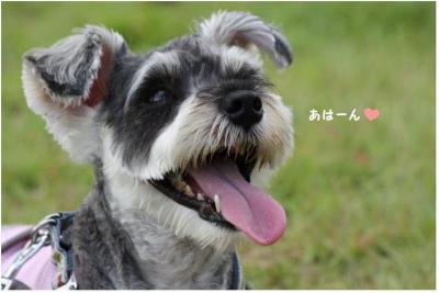 コピー (8) ~ ショコはぐ