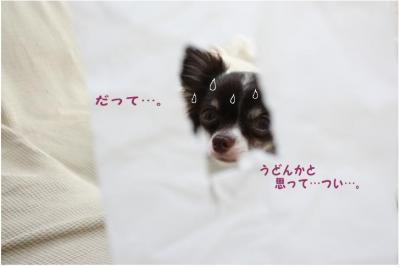 コピー (5) ~ うどん2