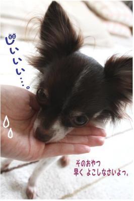コピー (5) ~ 得意技