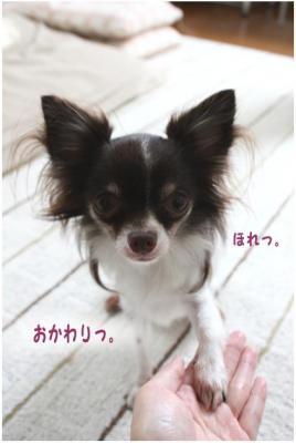 コピー (2) ~ 得意技