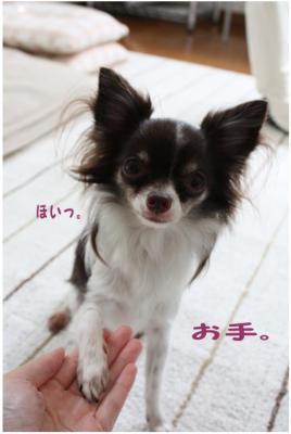 コピー ~ 得意技