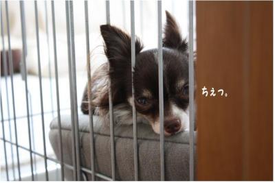 コピー (5) ~ はぐ社長