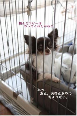 コピー (4) ~ はぐ社長