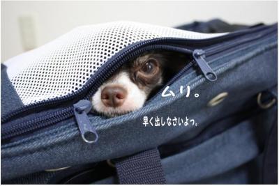 コピー (8) ~ コピー ~ ミシン2