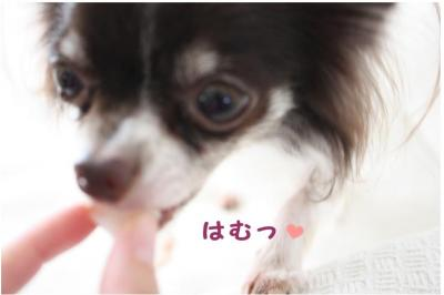 コピー (5) ~ おやつ