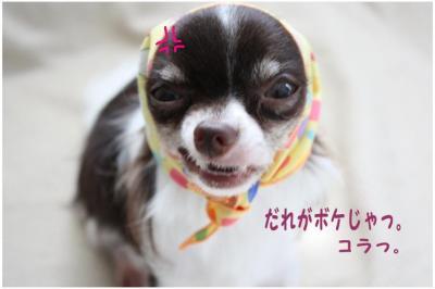 コピー (6) ~ バンダナ
