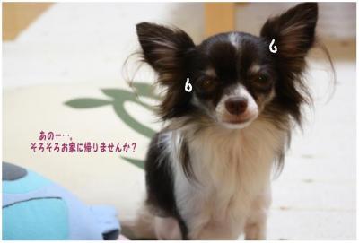 コピー (2) ~ 大阪