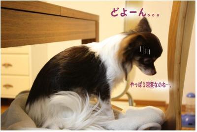 コピー ~ 大阪2