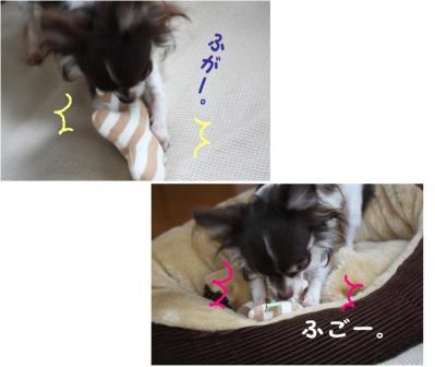 コピー (7) ~ プレゼント