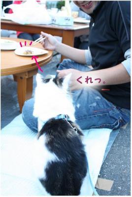 コピー (4) ~ BBQ2
