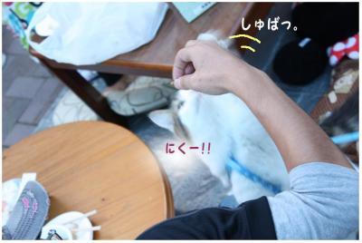 コピー (5) ~ BBQ2