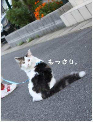 コピー (9) ~ BBQ2