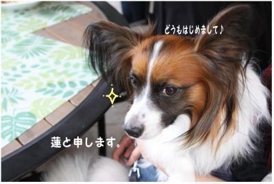 コピー (3) ~ 手酌隊
