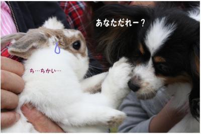 コピー (4) ~ 手酌隊2