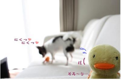 コピー (7) ~ お肉