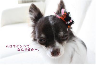 コピー (2) ~ ハロウィン