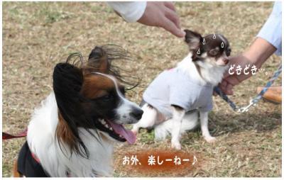 コピー (8) ~ どうめき