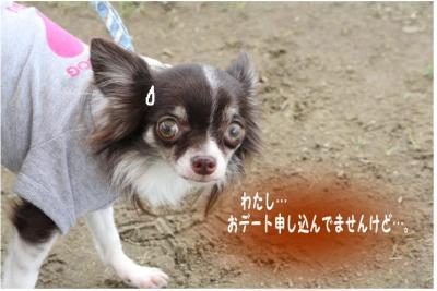 コピー ~ どうめき