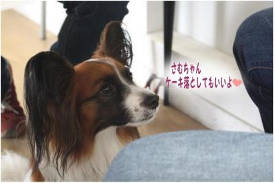 コピー (5) ~ どうめき2