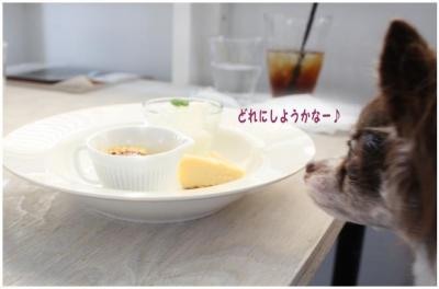 コピー (4) ~ どうめき2