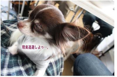 コピー (2) ~ どうめき2