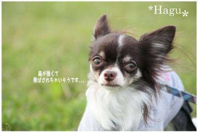 コピー (6) ~ どうめき3