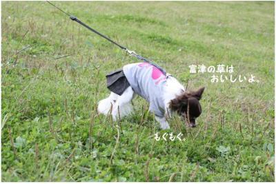 コピー (3) ~ どうめき3