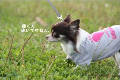 コピー (2) ~ どうめき3